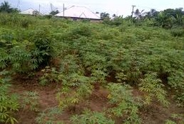 600 SQM LAND FOR SALE AT G.R.A IKEJA, LAGOS